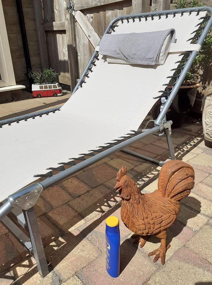 Chicken-trying-to-Sunbathe-Cathy-Wilde