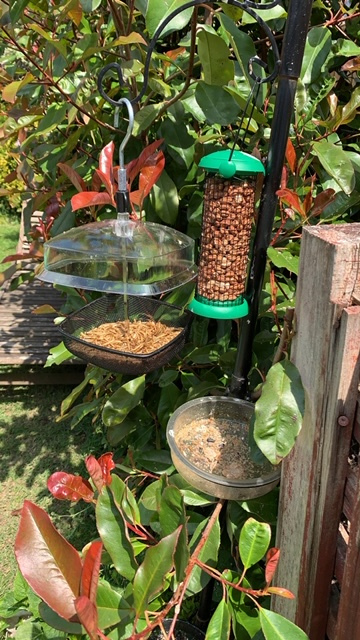 Nuts-for-the-Birds-Denise-Farrow