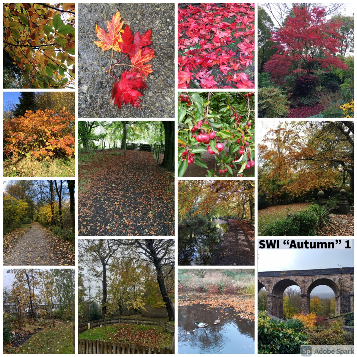 SWI-Autumn-part1
