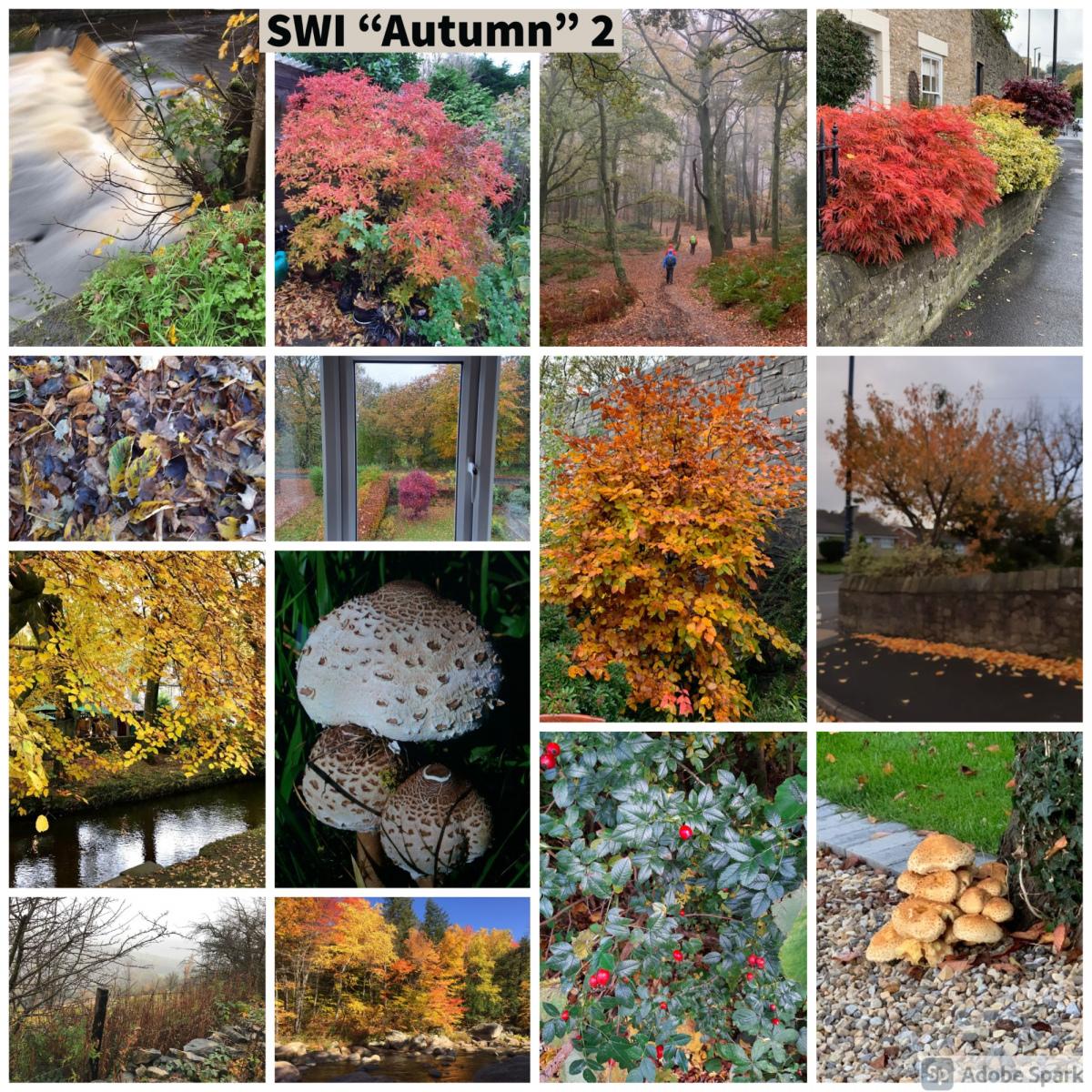 SWI-Autumn-part2