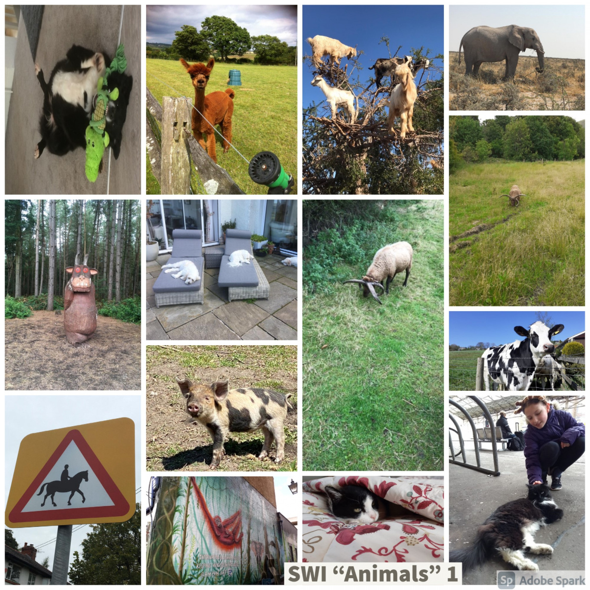 SWI-Animals-1