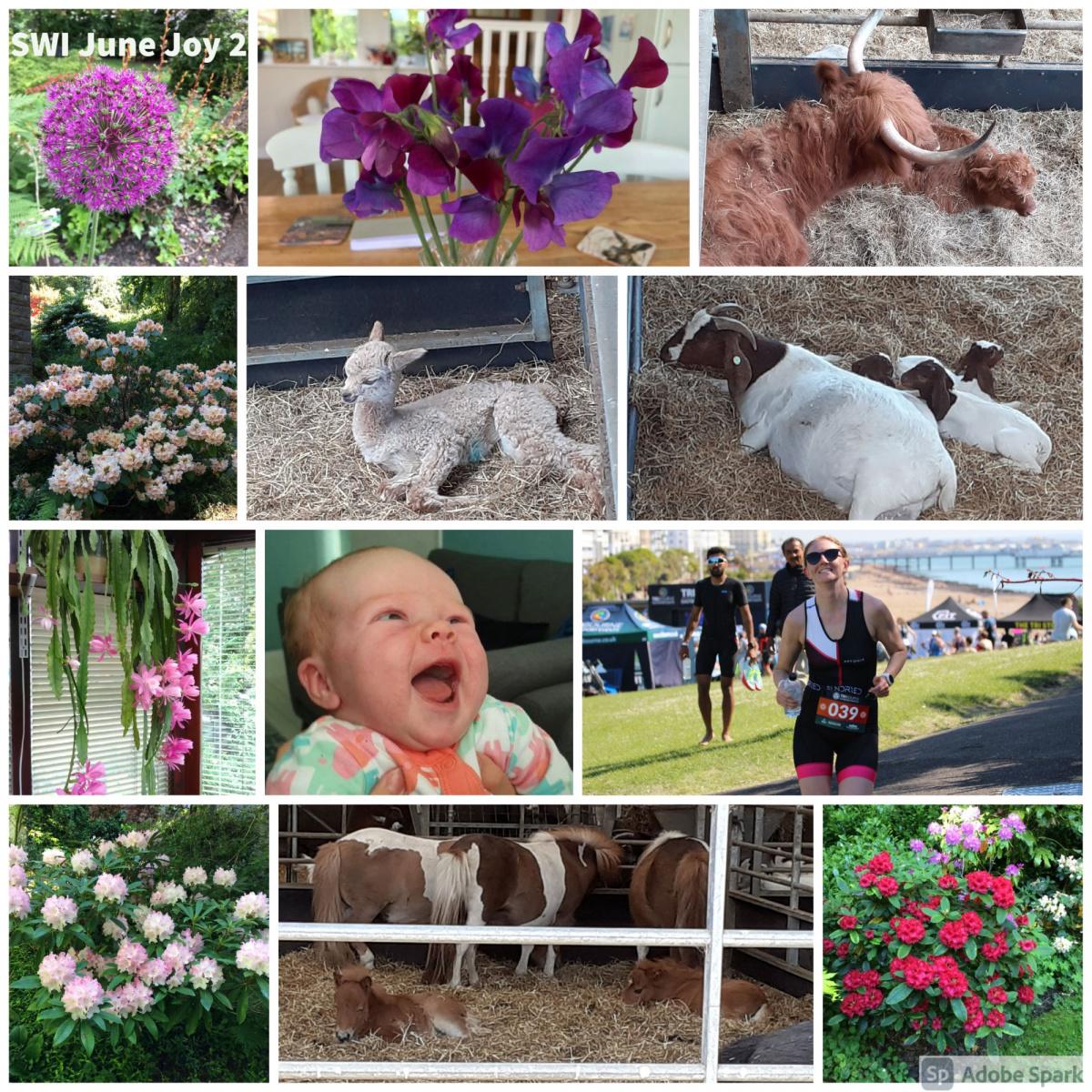 SWI-June-Joy-part2