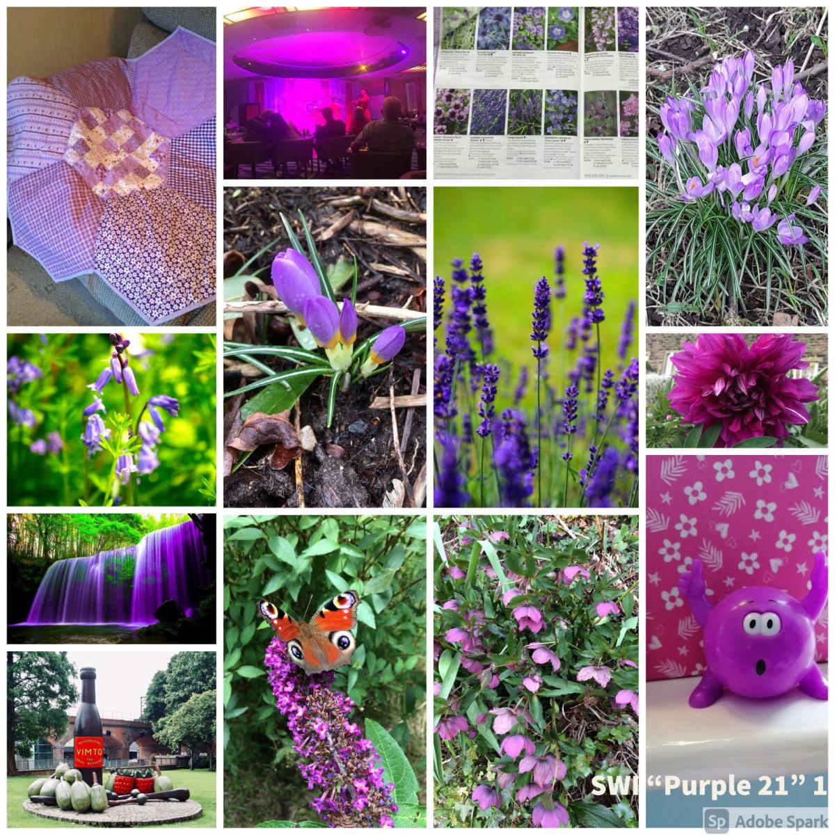 SWI-Purple-21-part1