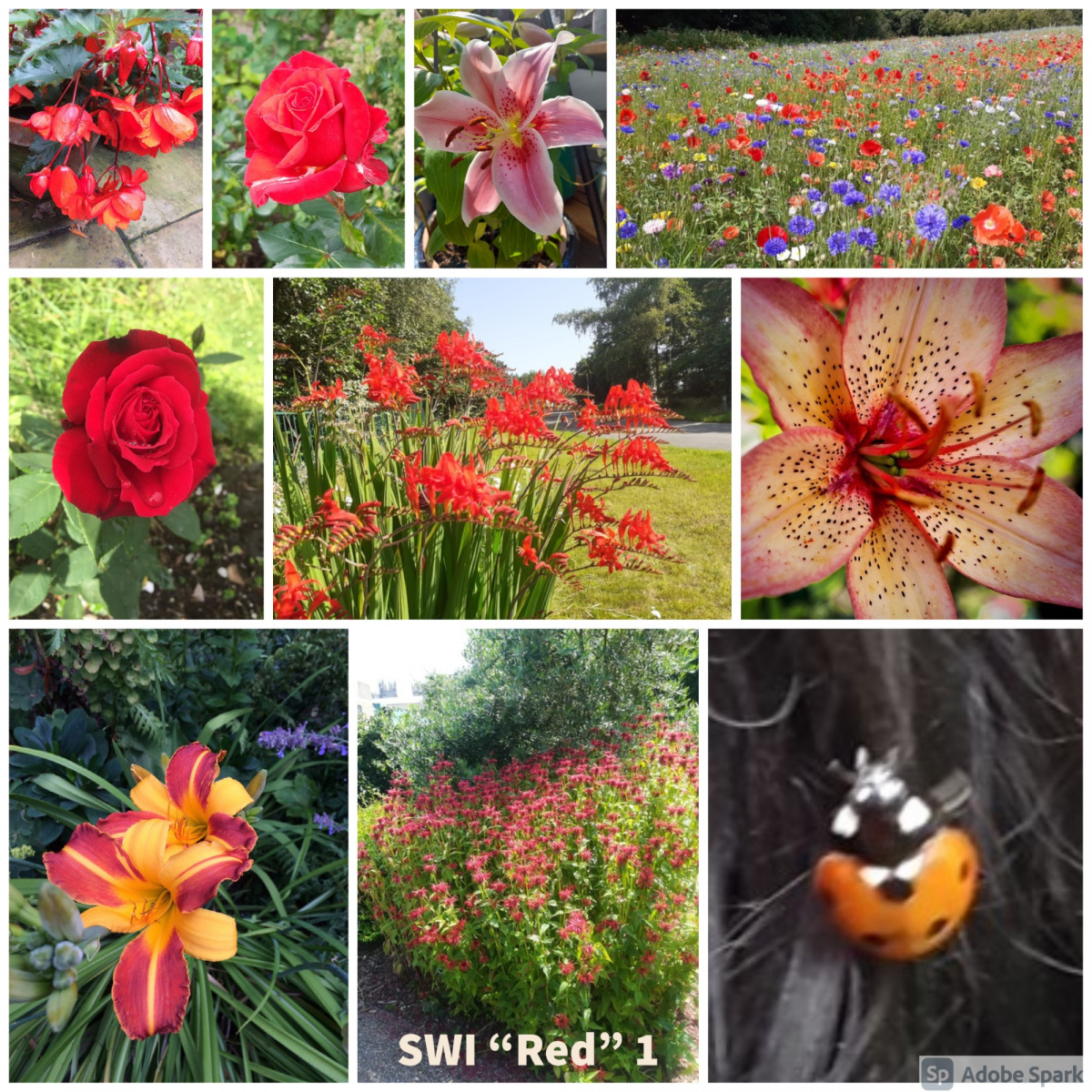 SWI-Red-part1
