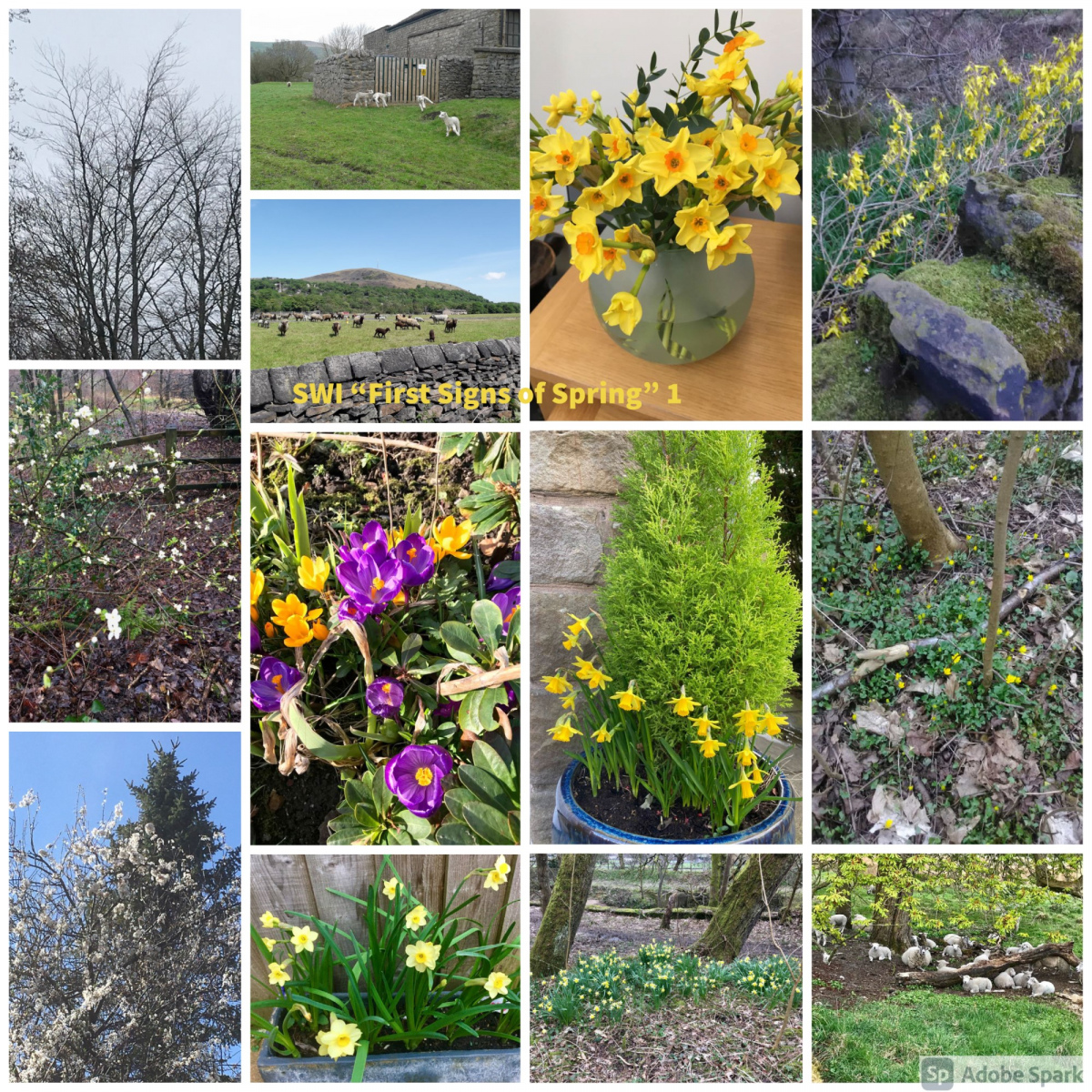 SWI-First-Signs-of-Spring-part1