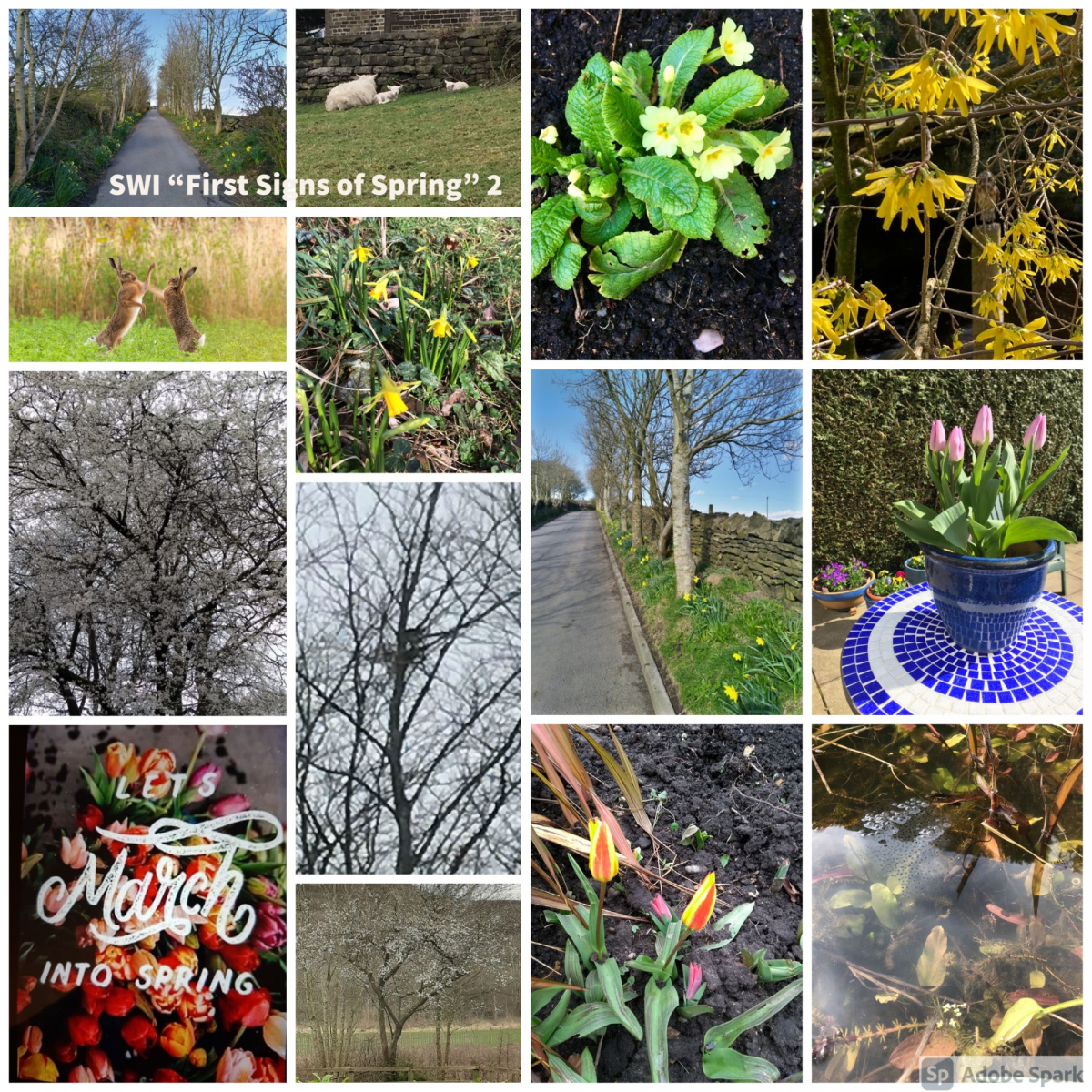 SWI-First-Signs-of-Spring-part2