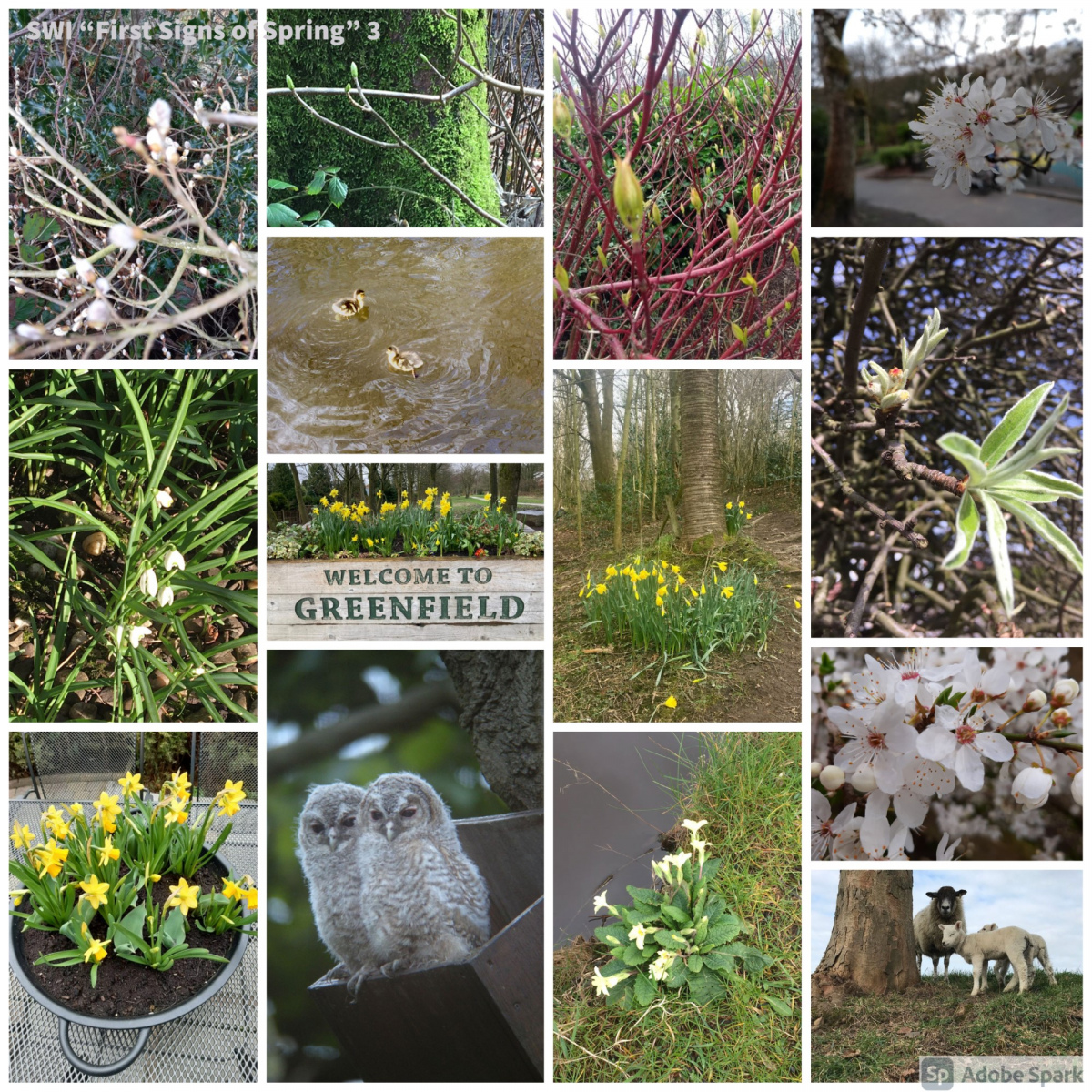 SWI-First-Signs-of-Spring-part3