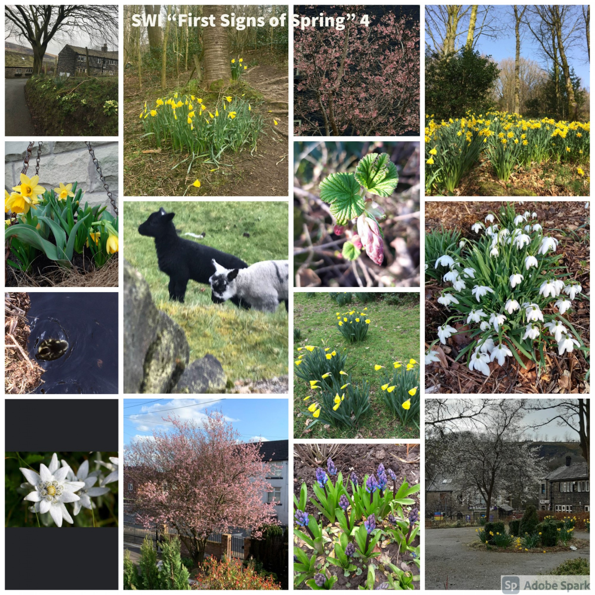 SWI-First-Signs-of-Spring-part4