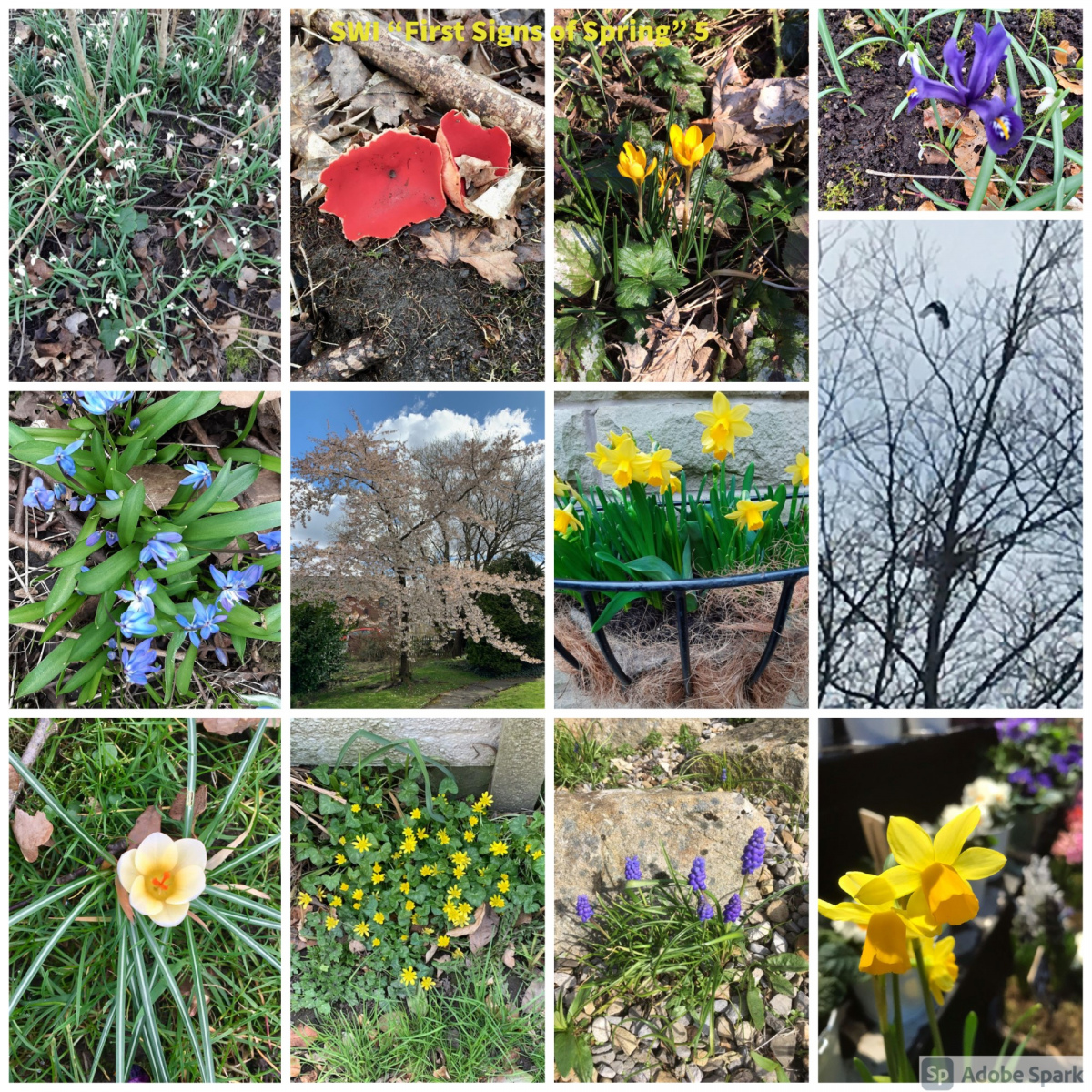 SWI-First-Signs-of-Spring-part5